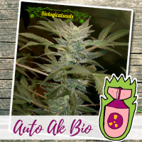 Auto AK BIO - Biological Seeds