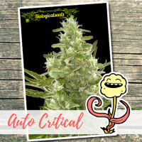 Auto Critical - Biological Seeds