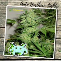 Auto Northern Lights - Biological Seeds