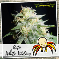 Auto White Widow - Biological Seeds