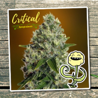 Critical - Biological Seeds